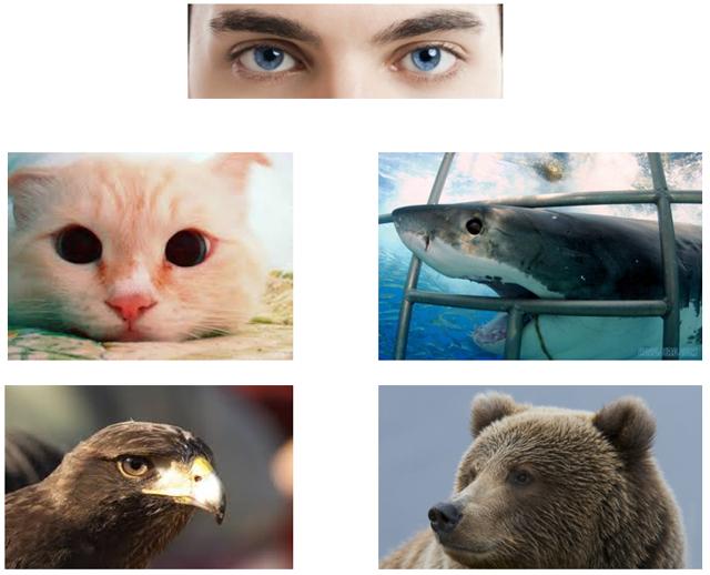 様々な動物の目