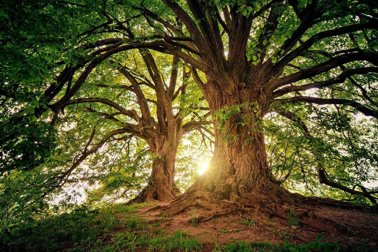 """チーム力向上のための継続支援サービス始めます!~Innovative Organization Tree """"Growth""""~"""
